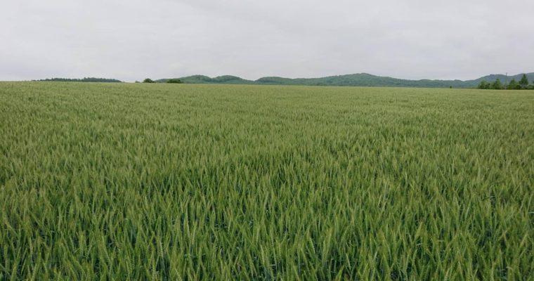 北海道小麦便り  オンリーワンのパン作り 株式会社山本忠信商店